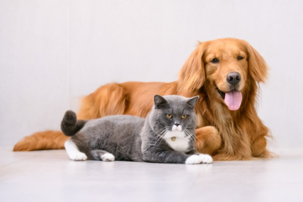 Psy i koty